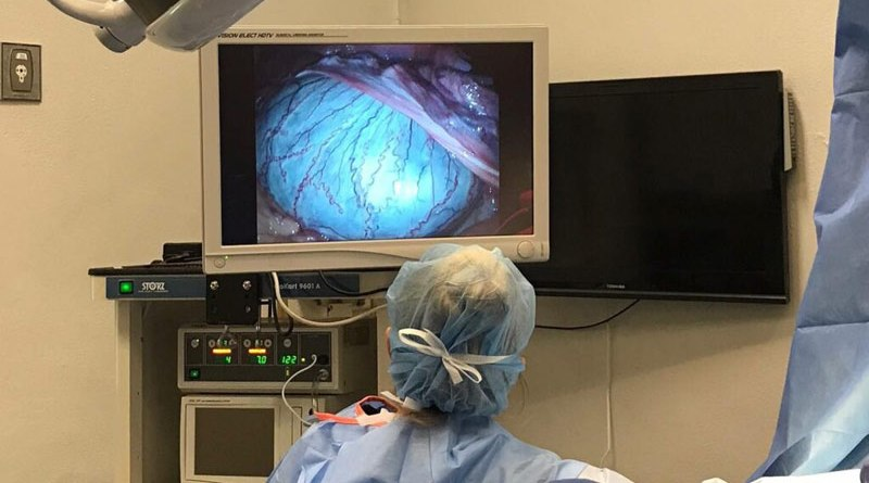 A laparoscopy revealed Marquis was suffering from torsion in his undescended testes.