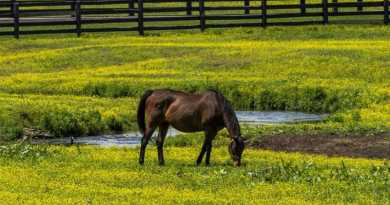 Timing everything in controlling troublesome horse pasture weeds