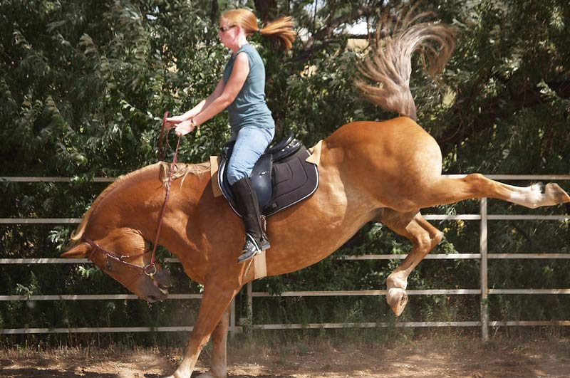 Researchers describe bucking as an upward leap, usually in addition to forward propulsion, when either both hindlimbs or all four limbs are off the ground.