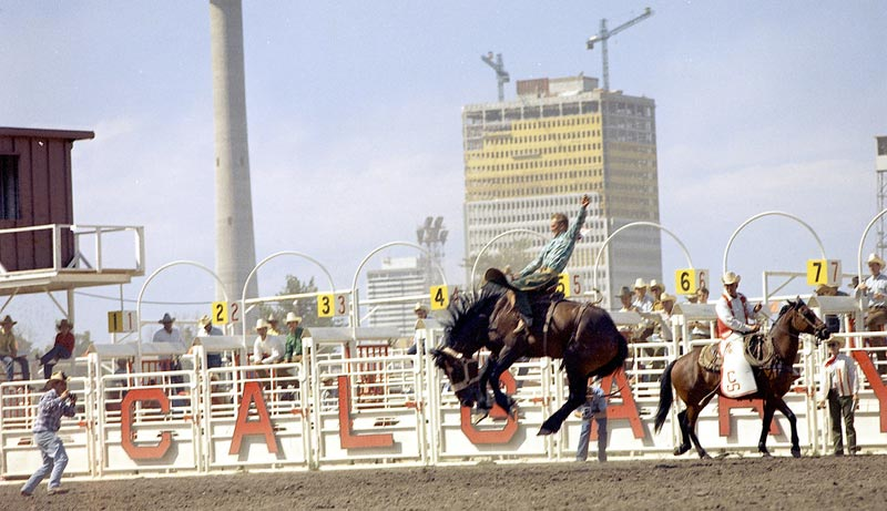 Horses with increased experience of rodeo displayed fewer reactive behaviours during both loading and holding in the chute prior to performance.