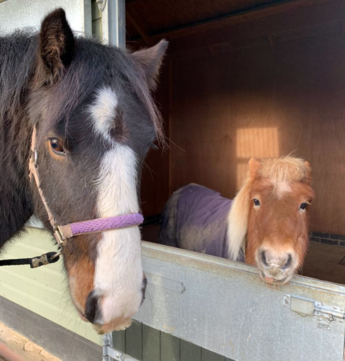 George with another resident at The Horse Trust. He generally preferred human company to other horses.