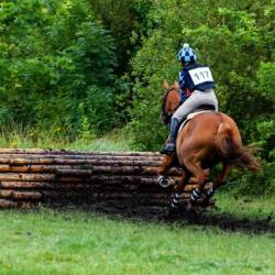Organisers of eventing competitions are being urged to carry out systematic oral inspections of horses. Photo: TheOtherKev/Pixabay