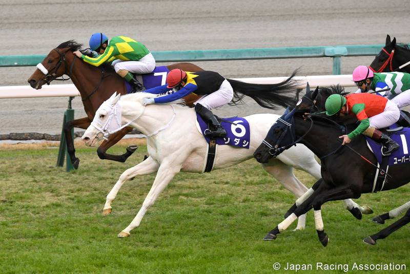 Sodashi winning the Group 1 Hanshin Juvenile Fillies stakes on December 13.