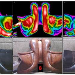 Thermographss of the undersides of saddles used in the study. A had correct saddle width, B was narrow and C was assessed as too wide. Thermographs taken from three horses who had the highest mean and peak saddle pressures (kPa) during the standardised ridden exercise test. Images: https://doi.org/10.3390/ani11041105