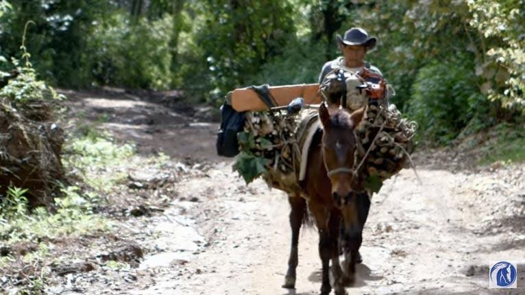 A working horse in Guatemala.
