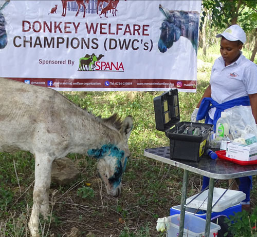 """""""Donkey Welfare Champions"""" learn about donkey welfare and how to help save the lives of donkeys in emergency situations."""