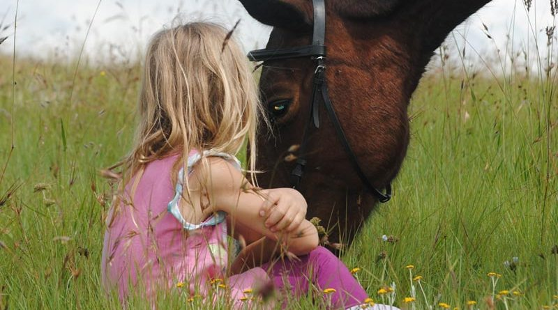 Results of a study in Italy indicated a lower sympathetic tone in horses involved in sessions with children with autism, when compared with traditionally developing children.