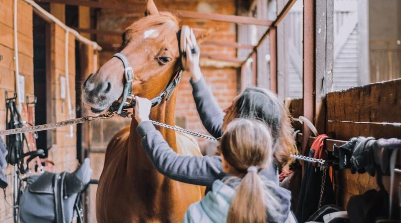 Maintaining the standard of care for the horse was prioritised regardless of who provided that care, the authors found.