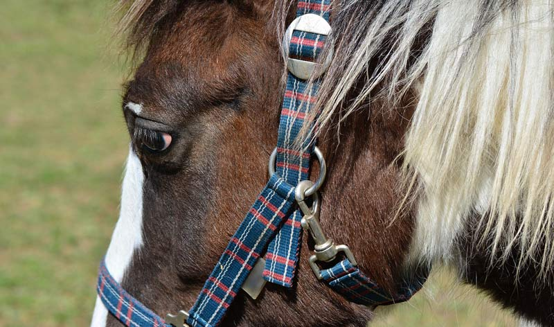The authors noted that there is no recognised safety standard for headcollars.