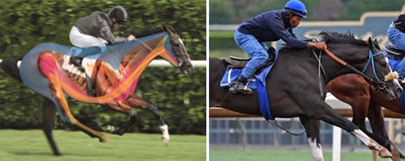 The image at left shows the important locomotor muscles, all linked to the mouth and tongue via the hyoid. The image at right shows a correctly fitted saddle, properly positioned rider and simple mouthpiece offering relaxation and free range of movement.