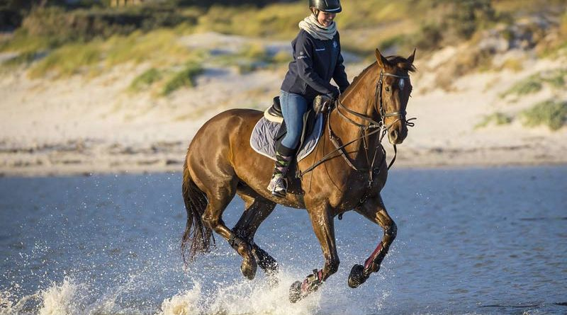 Side reins and the like can be an invaluable training aid, but there are risks from inappropriate use, say researchers.
