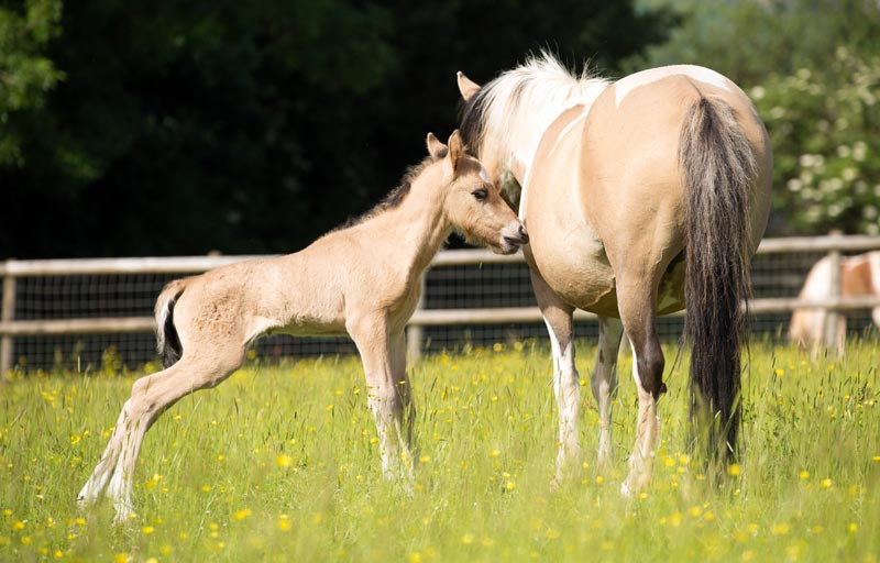 Solar pictured at a day old with his mum, Sandy.