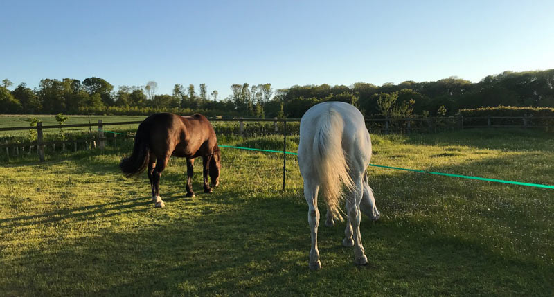 Strip grazing or break feeding has been found to be helpful in restricting weight gain in horses and ponies.
