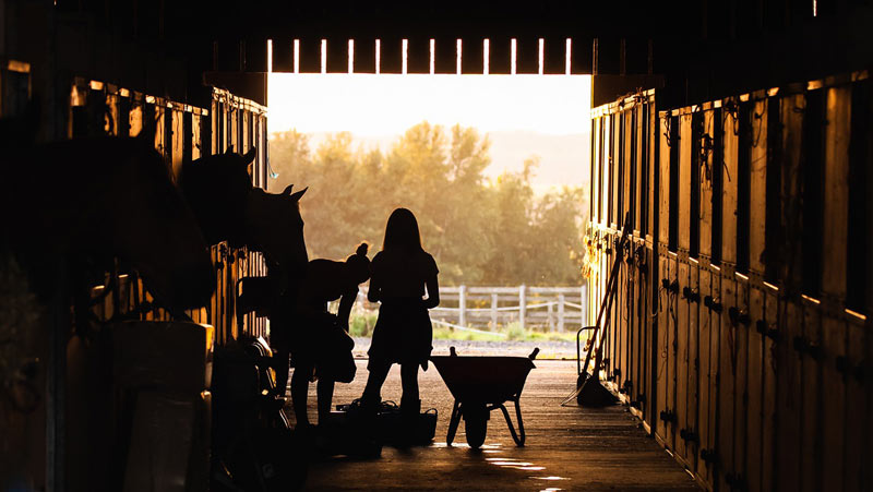 Ten horses at a 31-horse show barn in rural Pennsylvania showed an elevated temperature, but all appeared bright and alert. Eight were positive for EHV-1.