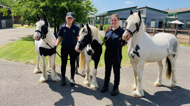 From left, Mr Bennett, Mr Bingley and Mr Darcy after their rehabilitation at Hall Farm.