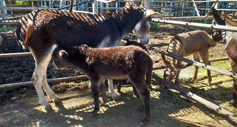 A foal is reunited with its mother at the Kloof and Highway SPCA facility near Durban.