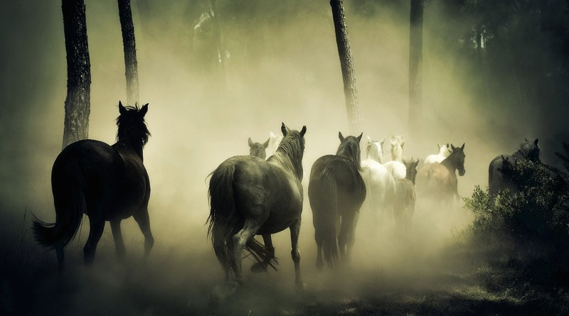 EHV-1 is believed to have co-evolved with horses over millions of years.