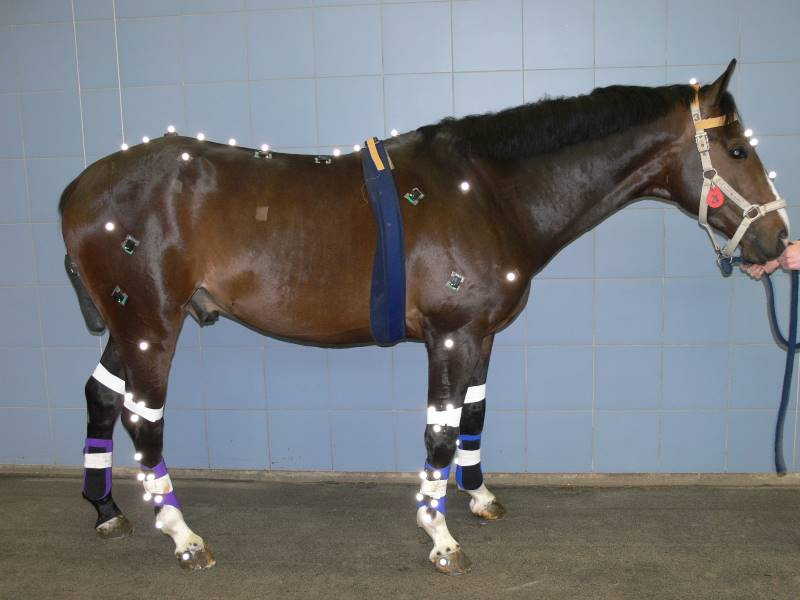 Sensors fitted to the horses in the study are being used to quantify changes arising from lameness.