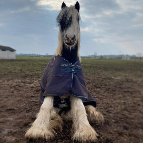"""Moses is a cheeky farm favourite and cover star of World Horse Welfare's """"Sponsor a Stableyard"""" campaign."""