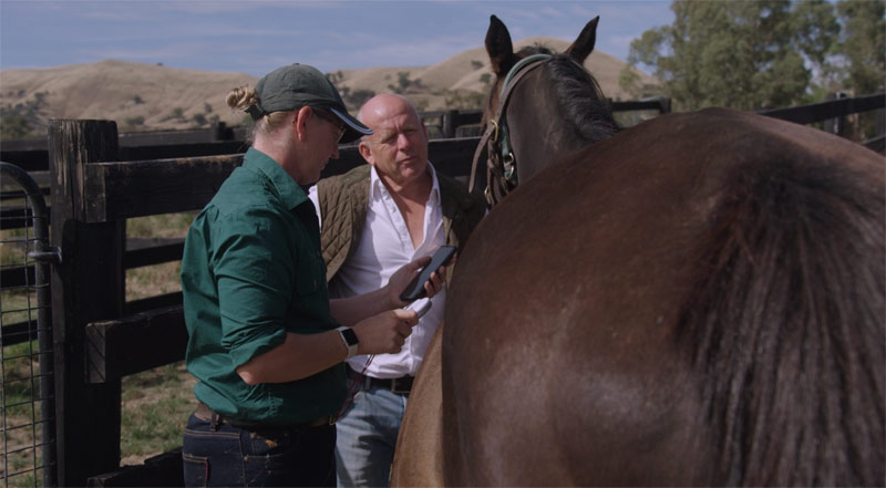 Australian-based Horse Passport is designed for both horse owners and equine professionals.