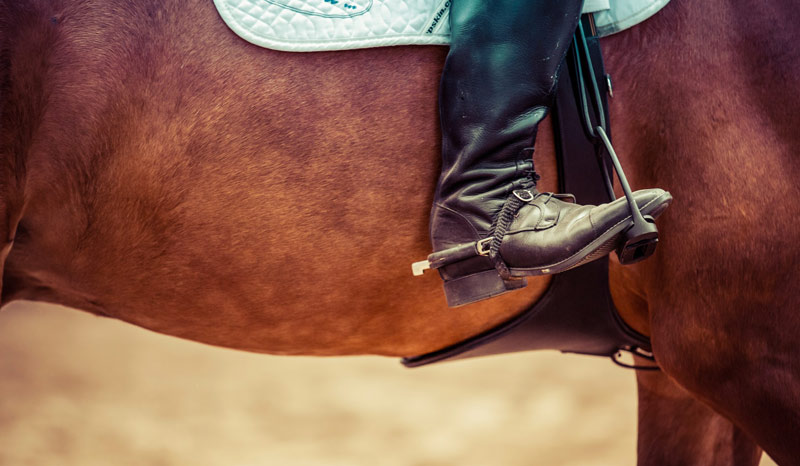 """""""Public, media, regulatory and governmental unease about health and welfare issues in sporting equines across disciplines is growing."""""""