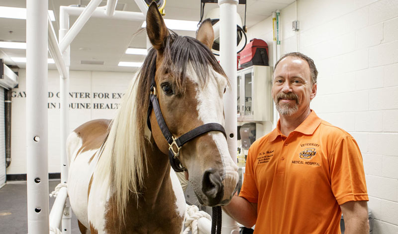 """Dr Todd Holbrook: """"That's the root of all research … the excitement of pursuing an answer that could potentially improve the health of a horse."""""""