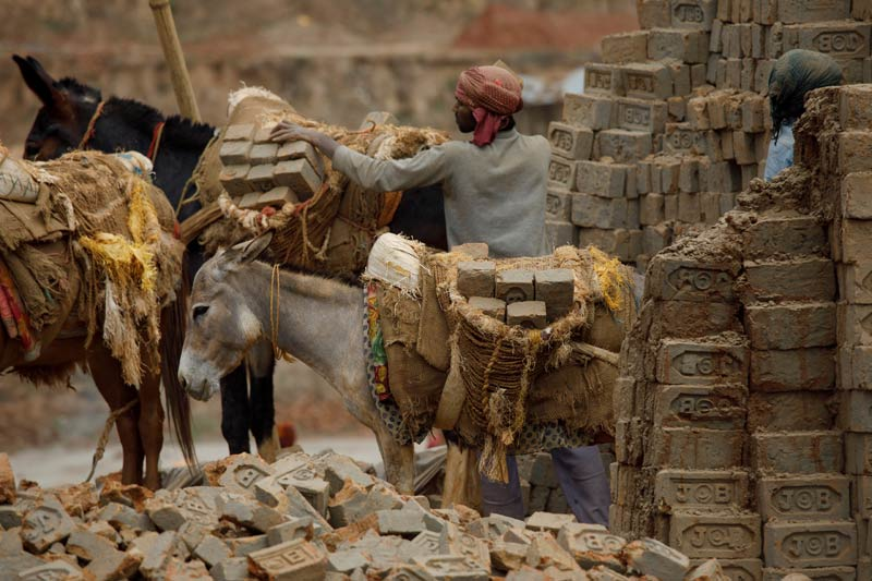 Mules and donkeys being loaded up with bricks at a brick kiln in Nepal.