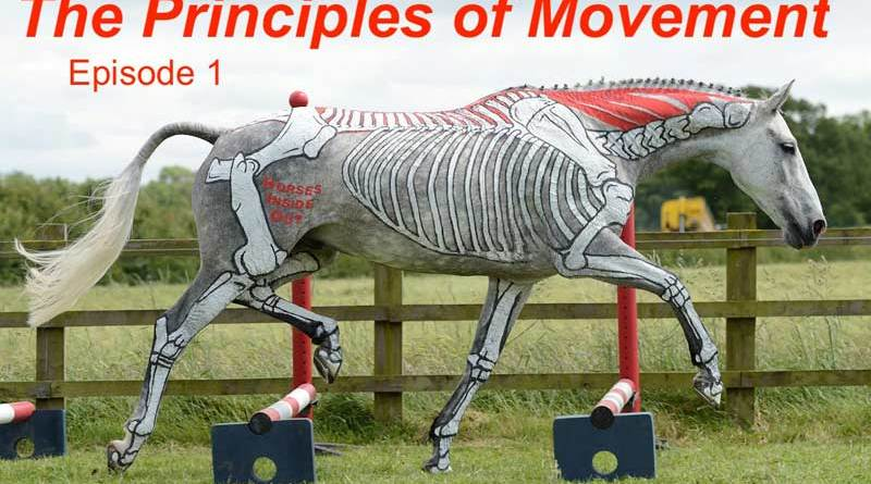 Horses Inside Out Autumn series - Episode 1: The principles of equine movement