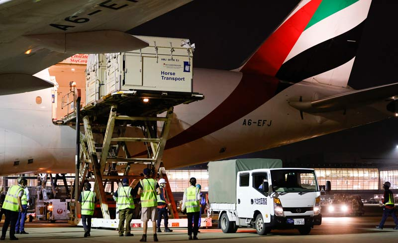 Haneda history-making: the first full cargo load of horses ever to land in Tokyo's Haneda airport arrived this week, ready for the Tokyo 2020 Olympic Games Equestrian competitions.