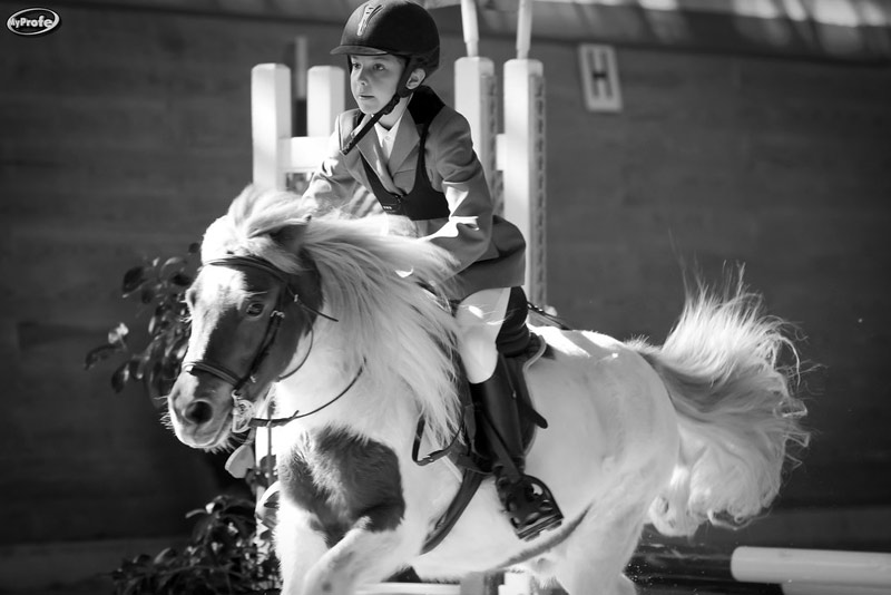 """In the context of blood chemistry, ponies have been suggested to be more like """"hot-blooded"""" than """"cold-blooded"""" horses."""