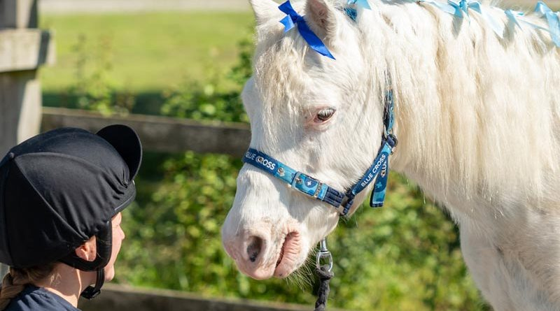 A sweet pony named Doughnut is looking for a new home where he can hang out with equines his own age.