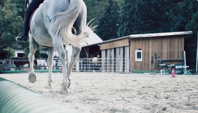 It is clear that many horse welfare problems are not due to intentional abuse, but because of anthropomorphic biases, cultural and personal beliefs.