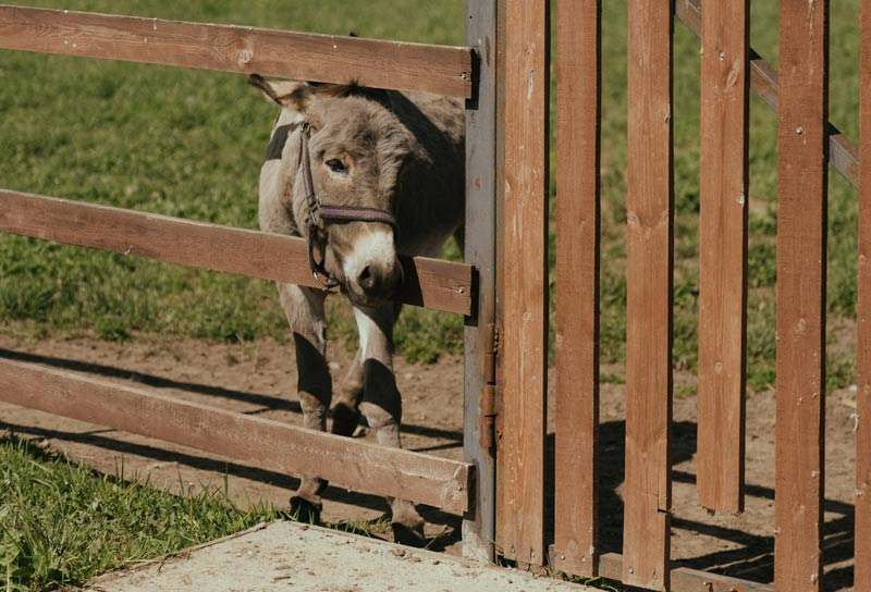 The study team set out to determine whether the transportation of donkeys disturbs the intestinal microbiota, which is an important factor in health and disease.