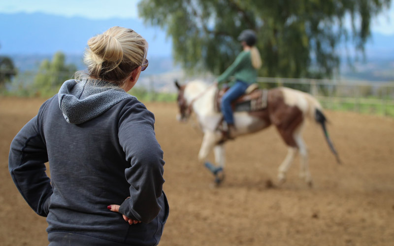 """There is a """"yard culture"""" -- the place where different owners have their horses kept -- where social processes of inclusion and exclusion influence individual decision-making, the researchers say."""