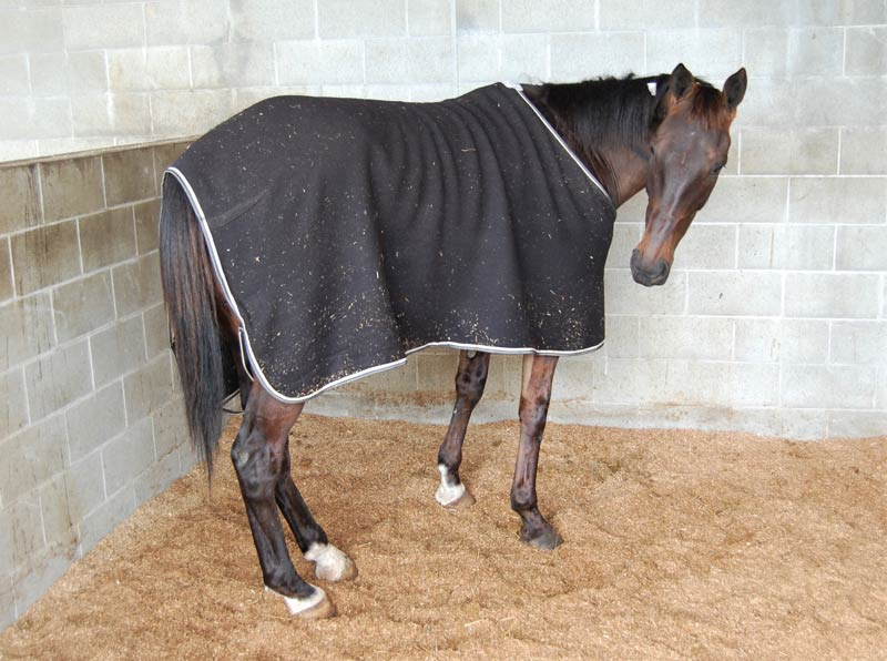 Keisha is on three months' box rest after suffering a fracture mid-race.