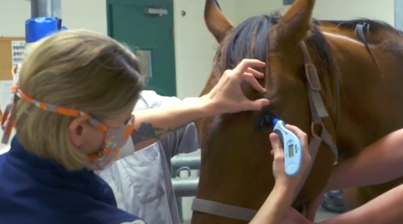 Researchers in the United States are working to develop a new eyedrop they hope will prevent or treat equine recurrent uveitis, or moon blindness, the most common cause of blindness in horses.