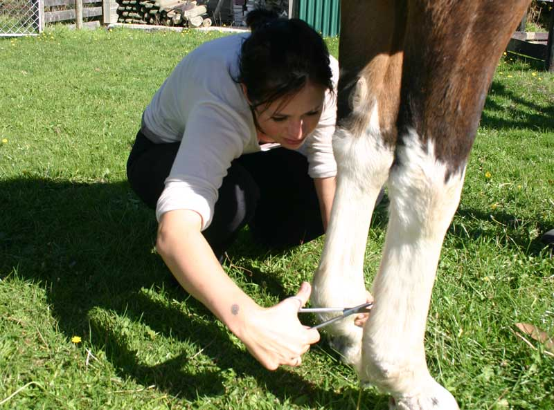 Some 92% of respondents to a British veterinary survey reported that they put themselves in a potentially dangerous situation when working with horses on at least a monthly basis.