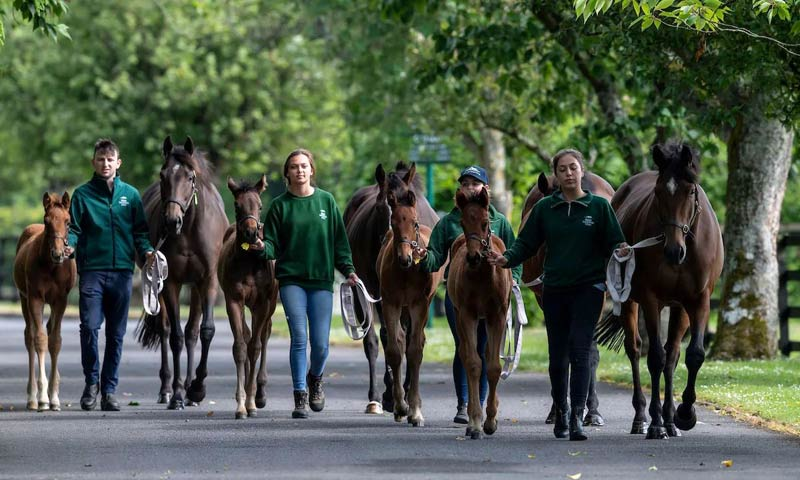 The six-month residential course which commences in January each year runs for the duration of the breeding season.