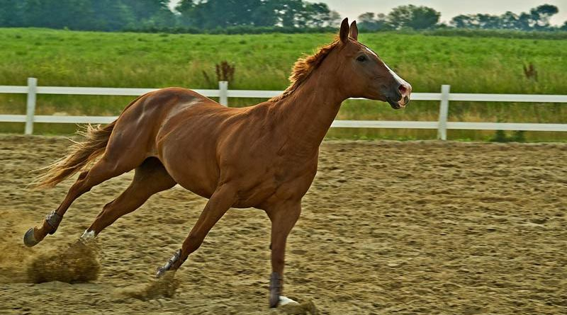 Biomechanics involves the analysis of various physical aspects of a horse, from its organ function to stride balance at racing speeds, all of which can affect speed and soundness.