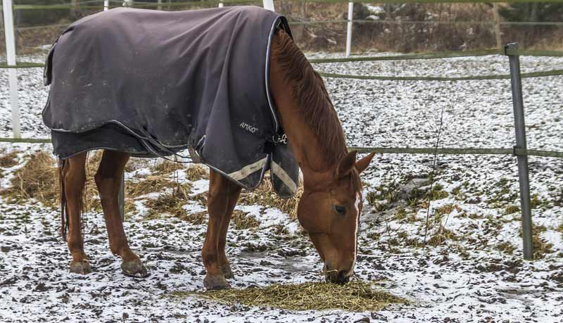 In 2007, the Swedish Animal Welfare Agency introduced additional requirements regarding enabling horses' need for social contact, providing daily exercise in paddocks or similar areas, limiting the time for which horses could be tied in stalls, and banning the building of new stables with tie stalls.