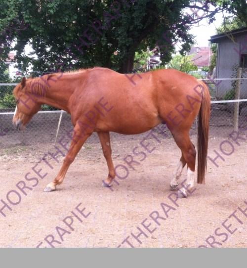Akupressur - Entspanntes Pferd nach einer Akupressur Behandlung