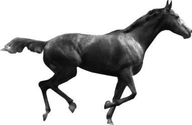 Logo Horsetherapie - Kontakt