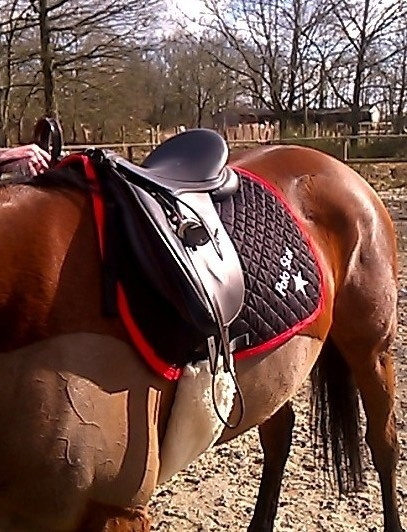 polo saddle pad