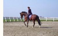 paardrijden training met Femke in de les