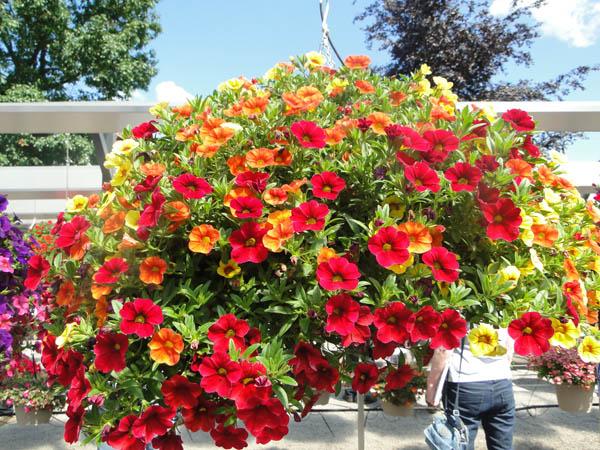 plante jardiniere et vasque schwarz