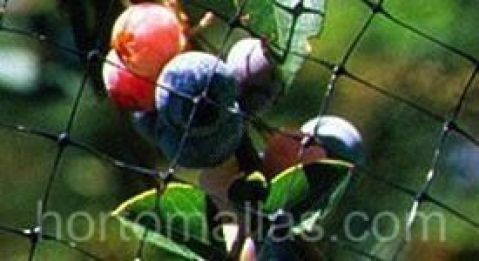 malla pajarera como protección en cultivos de frutas