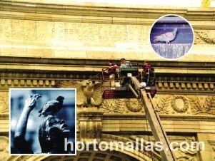 Malla Anti-Palomas GUACAMALLAS® instalación para edificio y sitios altos - Solución a la problemática de las aves en las ciudades