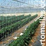 cultivo de pimentão com HORTOMALLAS