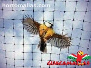 guacamallas