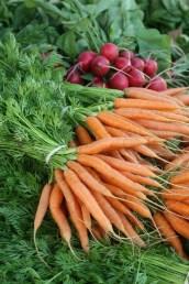 FM carrot-radish2591